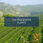 Tea Processing Plants