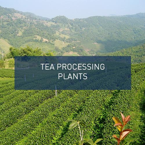 Tea Processing Plants